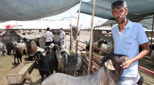 Satılmayan hayvanları Et ve Süt Kurumu alacak